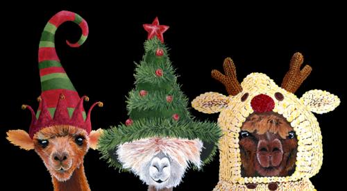Alpacas-Festive-nobg-web-v2